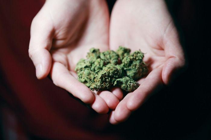 adicto cannabis